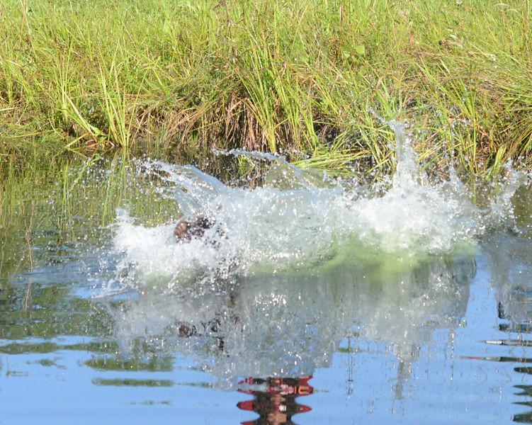Jar z Lovčických tarasů makes quite a splash!
