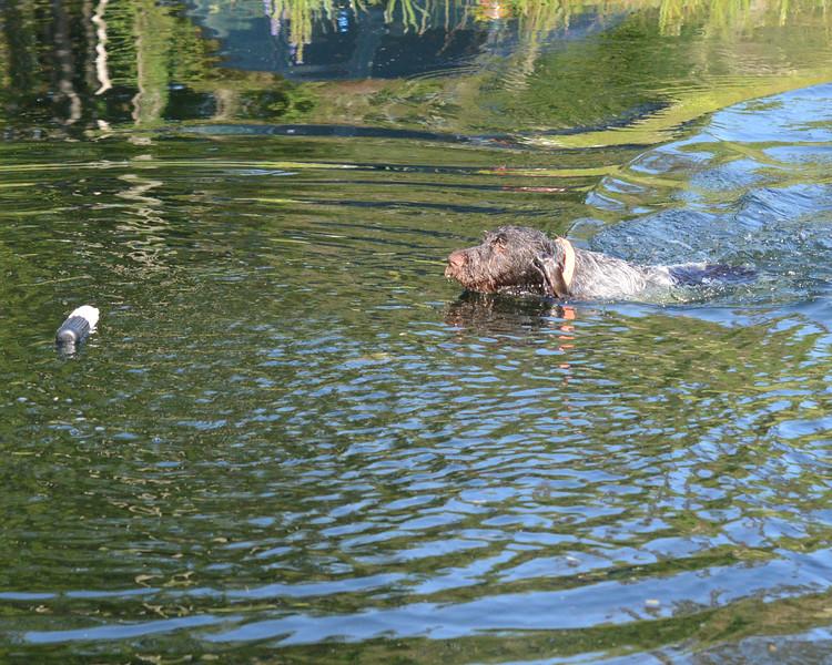 Jar z Lovčických tarasů loves to swim