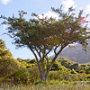 Tree in the Garden Cape Town
