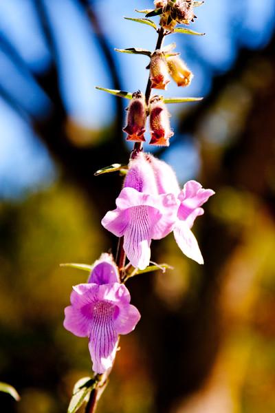 Light Purple Flower in Cape Town