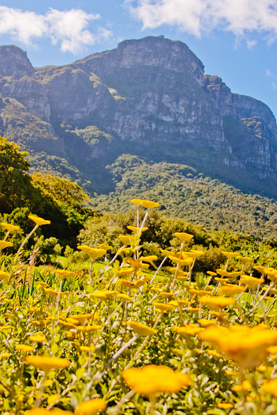 Botanical Garden in Cape Town