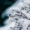 Gathering Snow