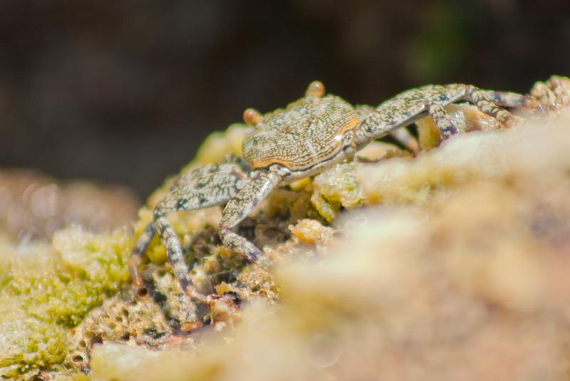 Macro Crab