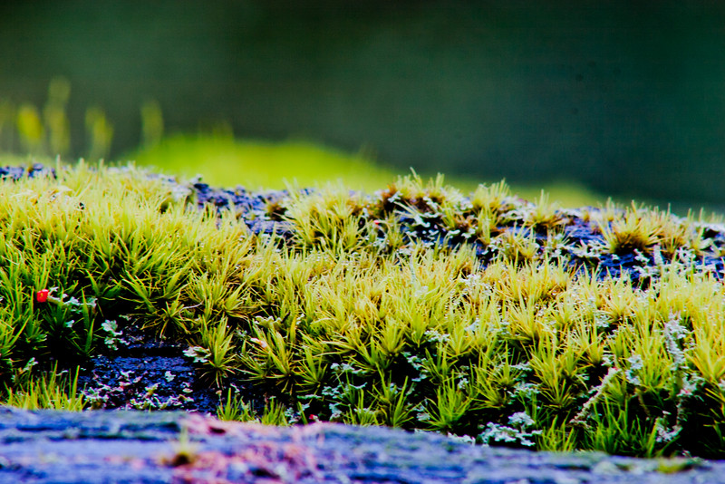 Moss in Northern California