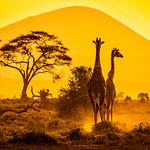 Felix Shparberg - African Sunset