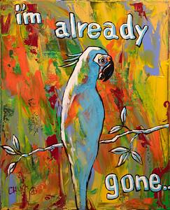 bird-3465
