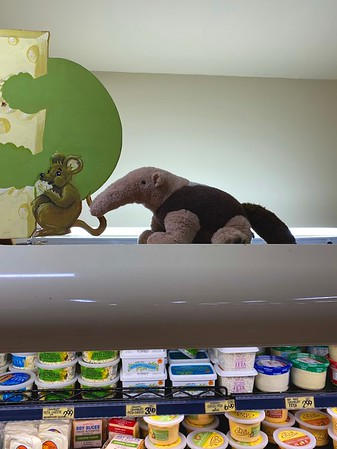 Irvine —Anteater (UCI Mascot)