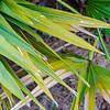 Palmetto fronds