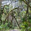 Washington Oaks trail