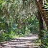 Trail at Washington Oaks State park