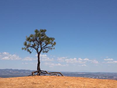 Lone Pine, Bryce Canyon
