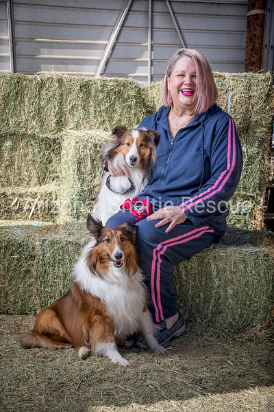 AZ Sheltie Portraits 2018 med-45