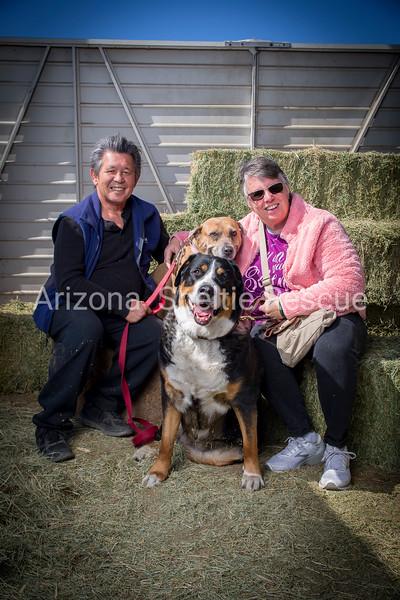 AZ Sheltie Portraits 2018 med-48