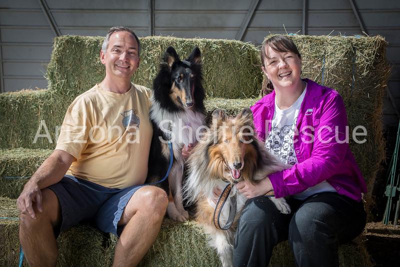 AZ Sheltie Portraits 2018 med-102