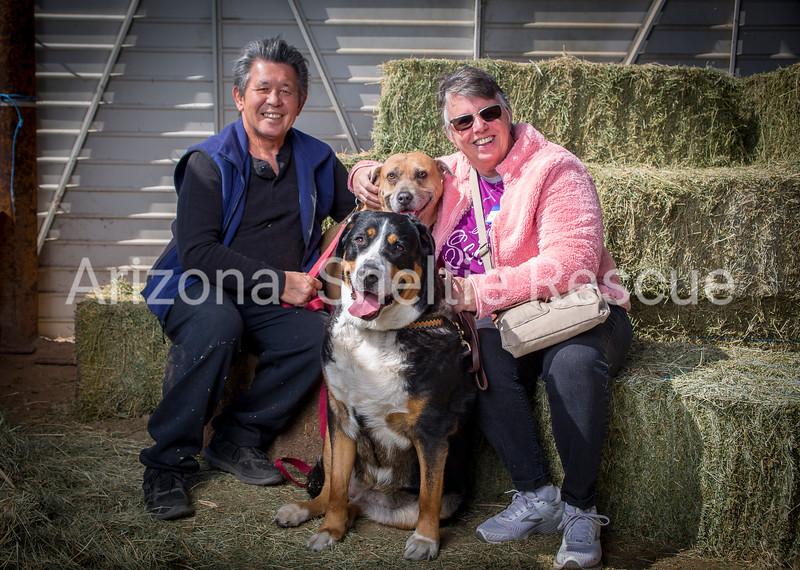 AZ Sheltie Portraits 2018 med-47