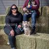 AZ Sheltie Portraits 2018 med-75