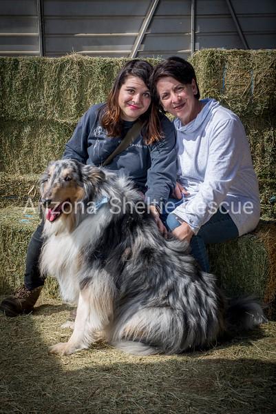AZ Sheltie Portraits 2018 med-58