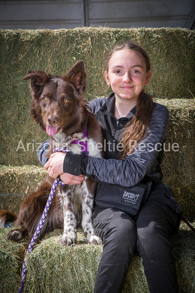 AZ Sheltie Portraits 2018 med-105