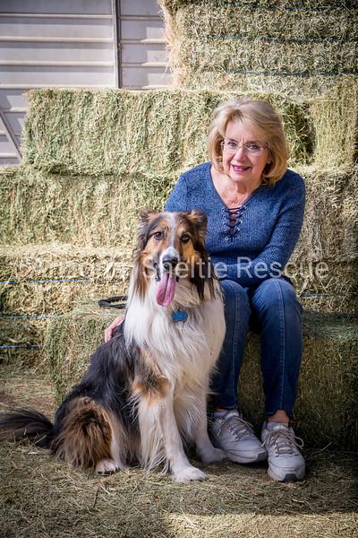 AZ Sheltie Portraits 2018 med-38