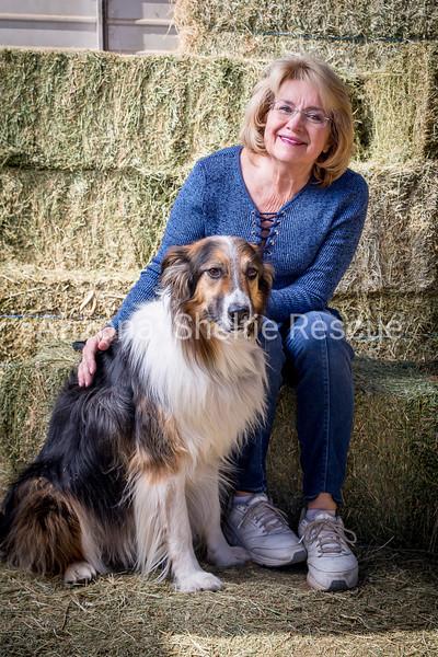 AZ Sheltie Portraits 2018 med-36