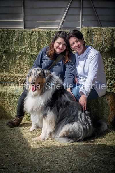 AZ Sheltie Portraits 2018 med-59