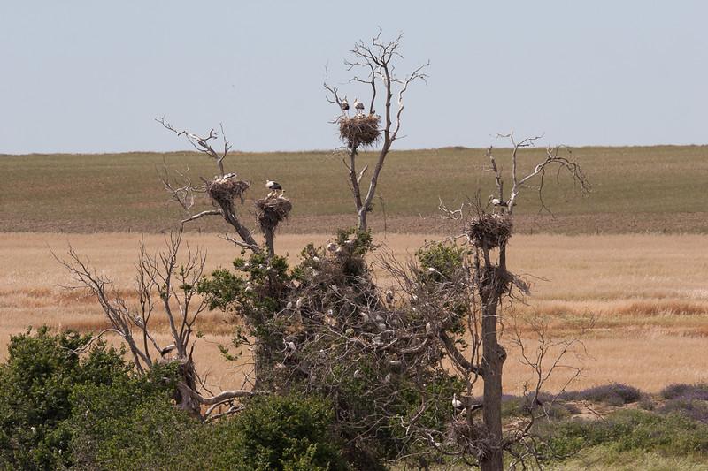 Hvid Stork og Kohejre