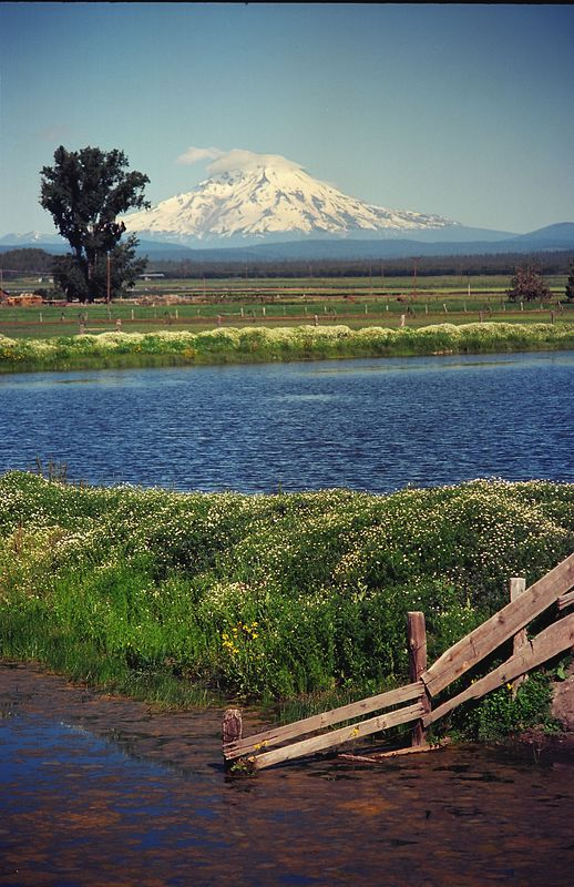 Mt. Shasta, from Fall River Valley, N.E. California