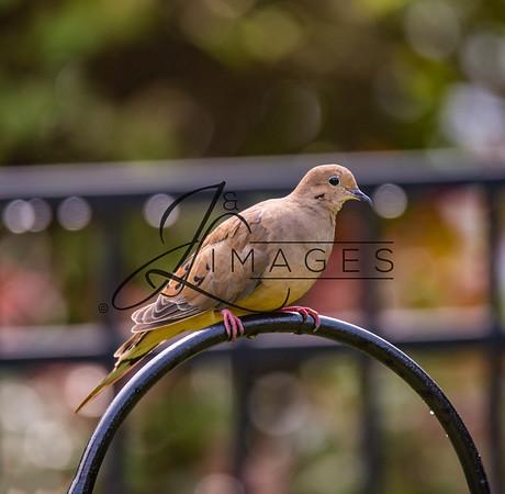 Photographs of Birds
