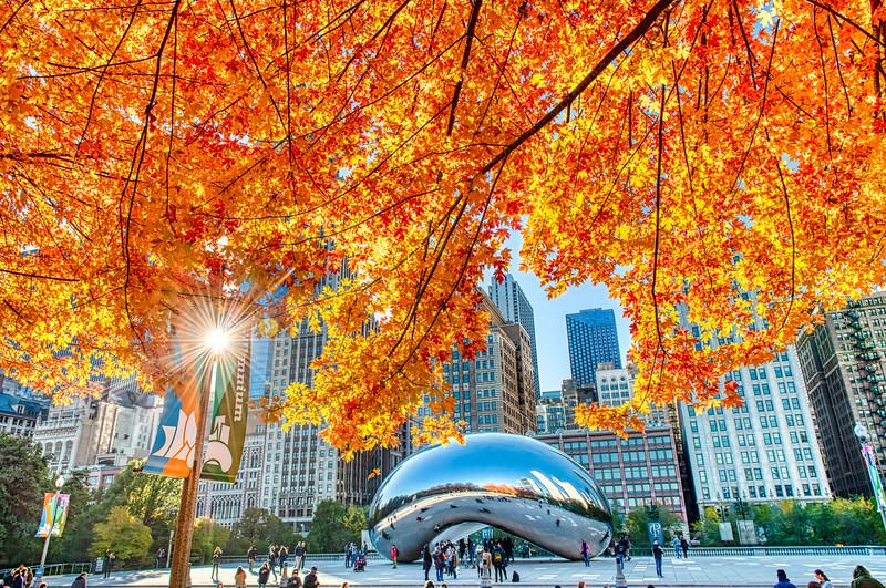 Autumn Sun Pierces the Fall Canopy Over the Bean
