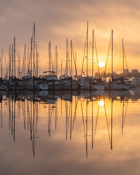 Sailboats at sunrise in St. Petersburg, Florida.