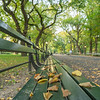 Park Bench in late fall along the Mall in Central Park.