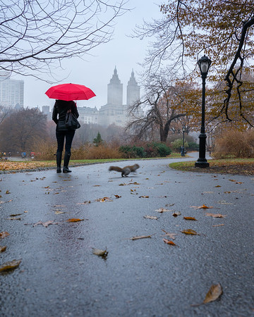 Woman with red umbrella in Central Park on a rainy day with the San Remo  in the distance.
