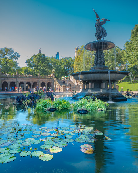 Fountain at Bethesda Plaza in Central with lilly pads in the foreground.