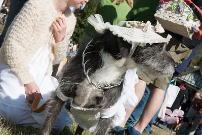 Avondale Dog Parade 2015