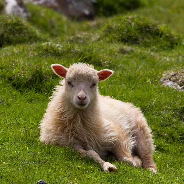 Færøerne_20110525-1DM45464