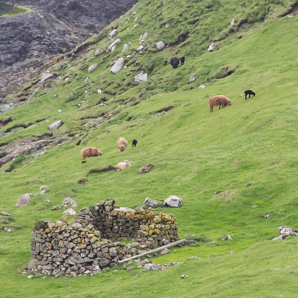 Færøerne_20110523-1DM45139