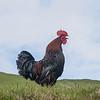 Færøerne_20110523-_MG_5051