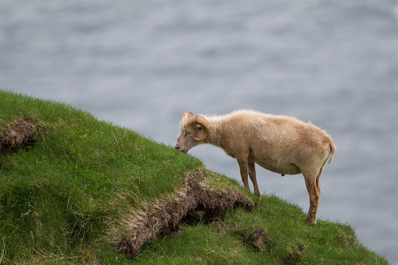 Færøerne_20110523-1DM45148