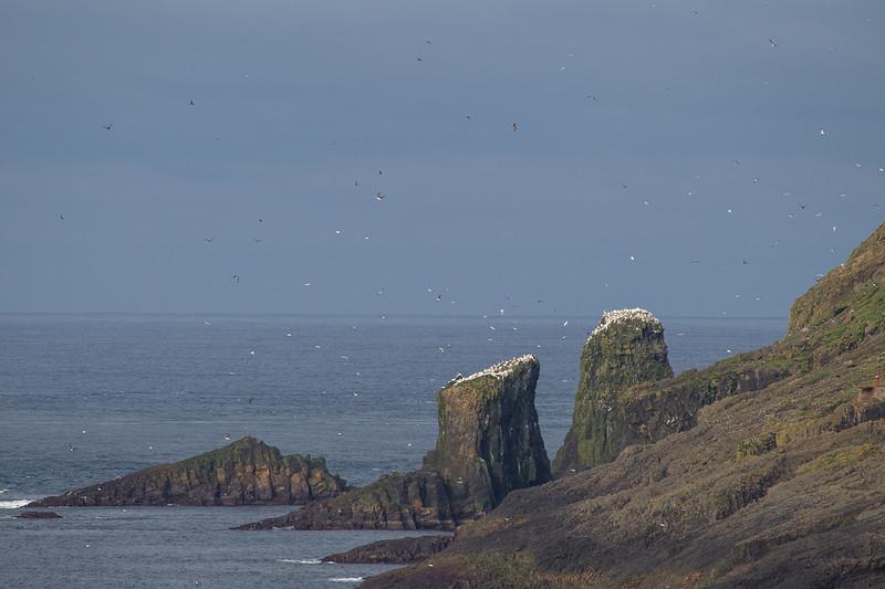 Færøerne_20110527-1DM45784