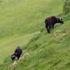 Færøerne_20110523-1DM45132