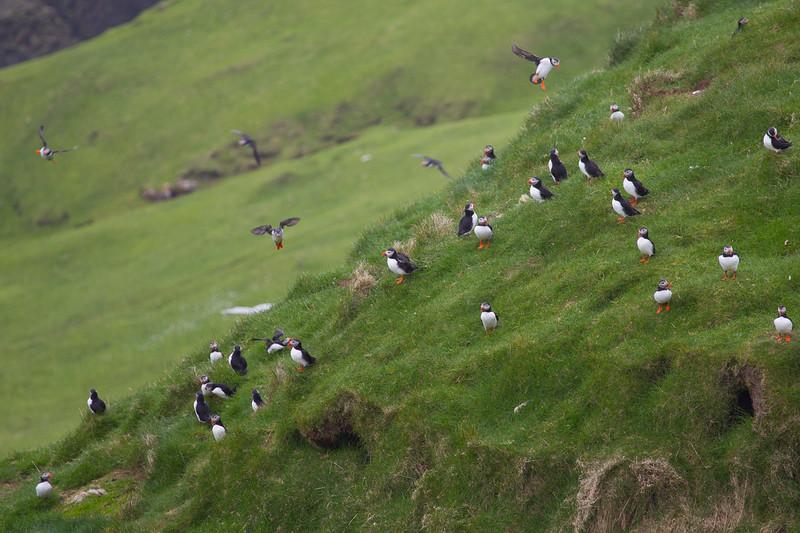 Færøerne_20110526-1DM45669