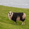 Færøerne_20110523-_MG_5168