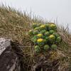 Færøerne_20110525-_MG_5270
