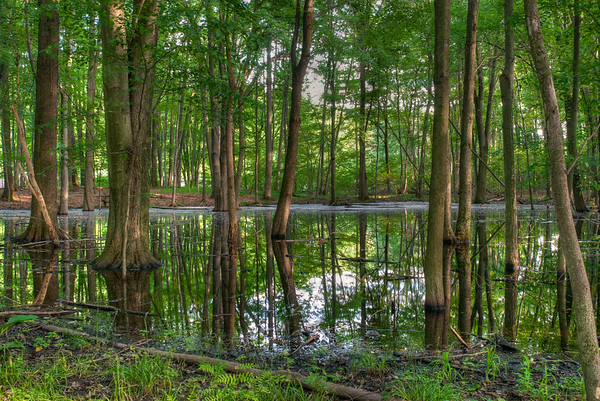 June 13, 2011 :: The Swamp <br /> This is the same area as yesterday's picture taken from the other side of the swamp/pond/flooded area.