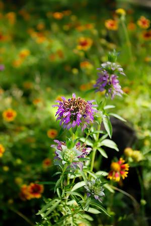 F. In the Field 09