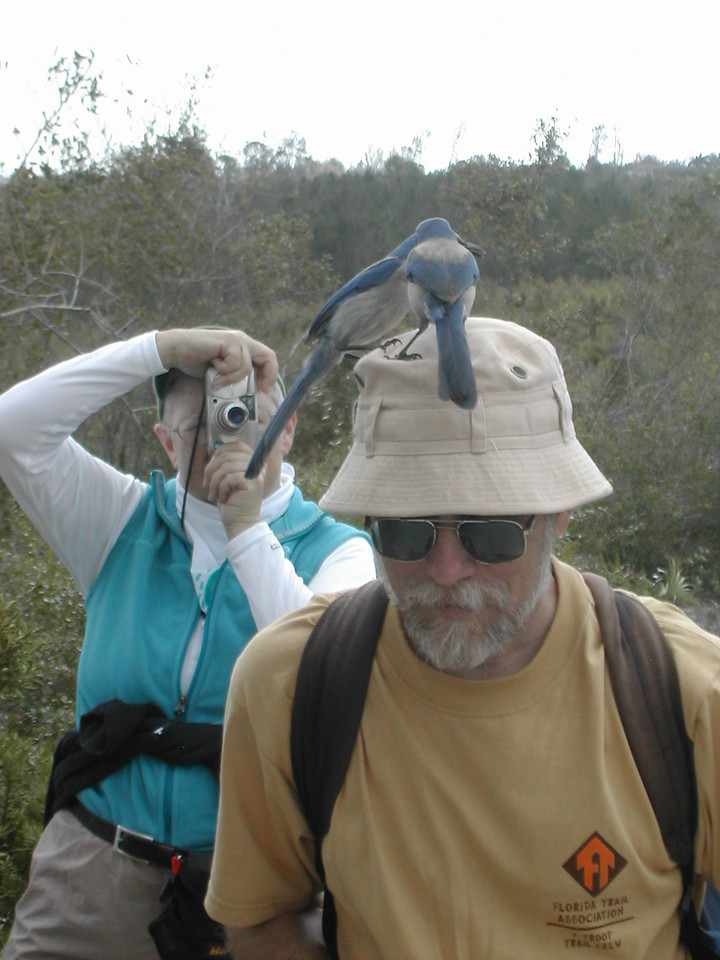Sunday Funday at Lyonia Preserve: Roger Werner attracts scrub-jays to his hat<br /> Photo credit: FTA / Sandra Friend