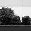 Wall Bushes -- Seattle (April 2010)