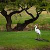 White craine under bansai tree on a little island