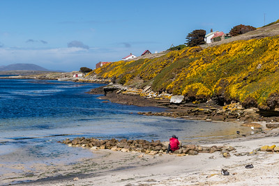 BEACH AND BAY NEW ISLAND FALKLAND ISLANDS