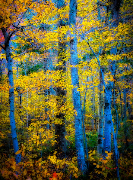 Fall blue and gold